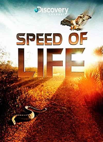 Скорость жизни онлайн