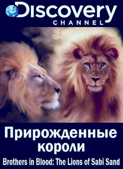 """Документальный фильм Discovery """"Прирожденные короли"""""""